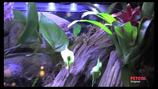 Tetra Viquarium - image 5 from the video