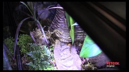 Tetra Viquarium - image 6 from the video