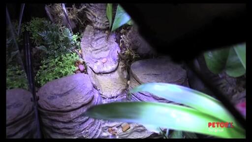 Tetra Viquarium - image 7 from the video