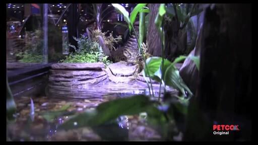 Tetra Viquarium - image 8 from the video