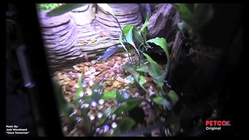 Tetra Viquarium - image 9 from the video