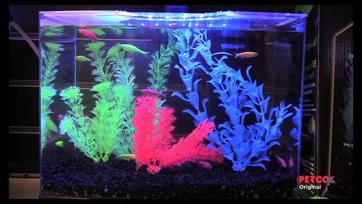 Tetra GloFish - image 2 from the video