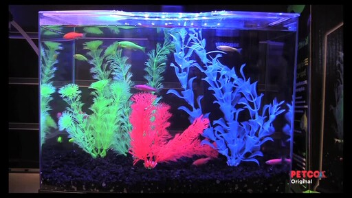 Tetra GloFish - image 3 from the video