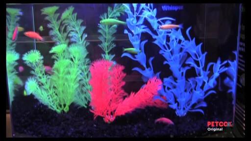 Tetra GloFish - image 5 from the video