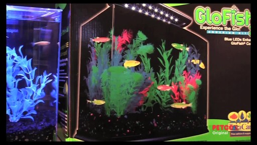 Tetra glofish ahpresources listpageresources petco video for Petco fish tank sale