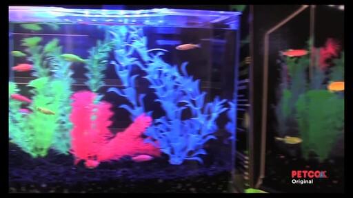 Tetra GloFish - image 7 from the video