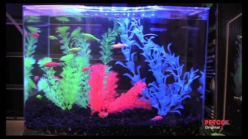 Tetra GloFish - image 8 from the video