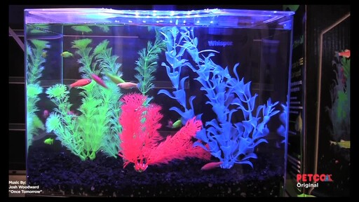 Tetra GloFish - image 9 from the video