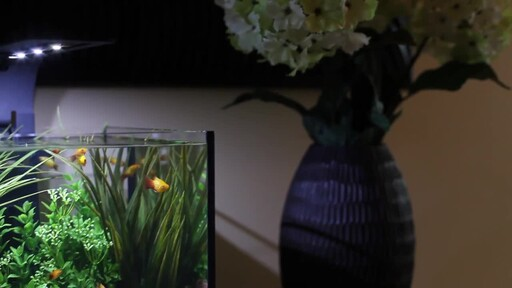 Ecoxotic EcoPico Desktop Fish Aquarium - image 3 from the video