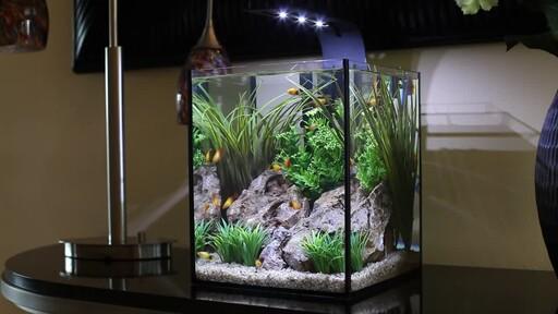 Ecoxotic EcoPico Desktop Fish Aquarium - image 4 from the video