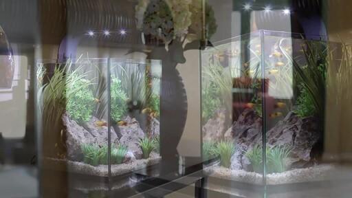 Ecoxotic EcoPico Desktop Fish Aquarium - image 5 from the video