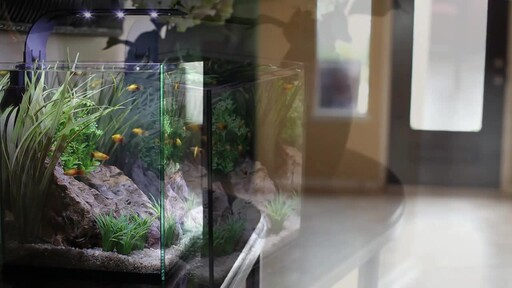 Ecoxotic EcoPico Desktop Fish Aquarium - image 6 from the video