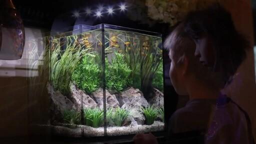 Ecoxotic EcoPico Desktop Fish Aquarium - image 8 from the video