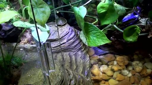 Tetra Viquarium Reptile & Amphibian Terrarium Décor Setup  - image 10 from the video