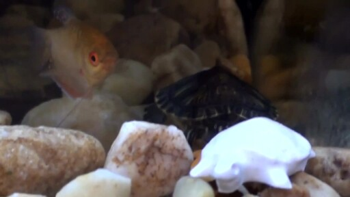 Tetrafauna Food and Water Care Products  - image 1 from the video
