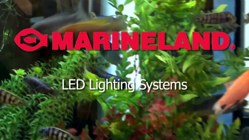 Marineland LED Lighting System - image 10 from the video