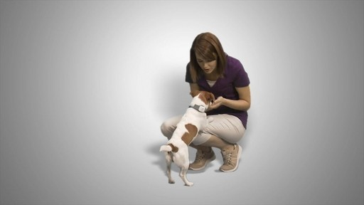 Tagg Pet Tracker - How it works - image 1 from the video