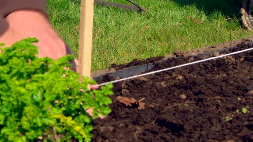 Conseils de jardinage – Le potager - image 4 from the video