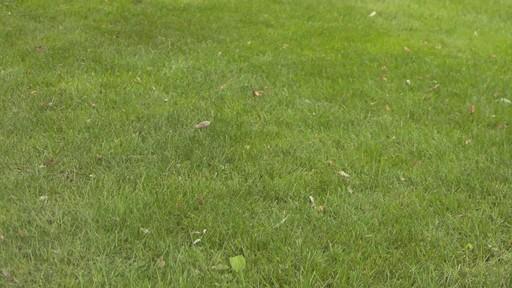 Application de terre à pelouse - image 2 from the video