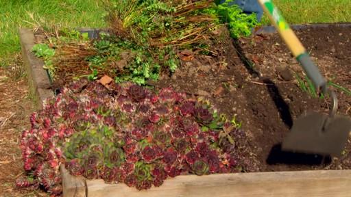 Conseils de jardinage – Conseils d'arrosage  - image 2 from the video