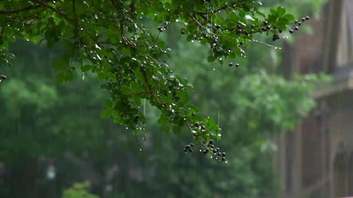 Conseils de jardinage – Conseils d'arrosage  - image 6 from the video