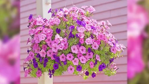 Terreau d'empotage pour plantes en pots - image 2 from the video