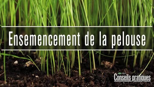 Ensemencement de la pelouse avec Frankie Flowers - image 1 from the video