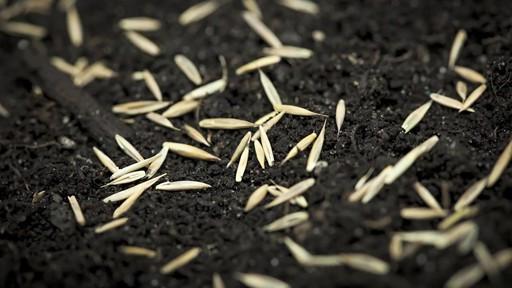 Ensemencement de la pelouse avec Frankie Flowers - image 3 from the video