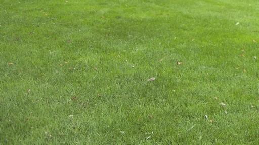Ensemencement de la pelouse avec Frankie Flowers - image 5 from the video