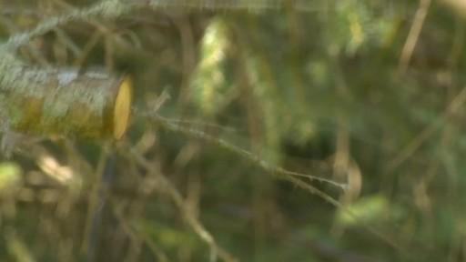 Sécateur à contre-lame Fiskars de professionnel - Témoignage d'Éric  - image 4 from the video