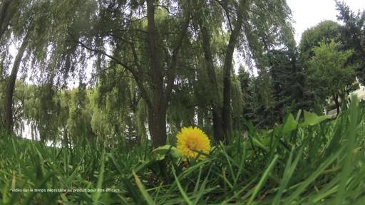 Suppression des mauvaises herbes de la pelouse - image 6 from the video
