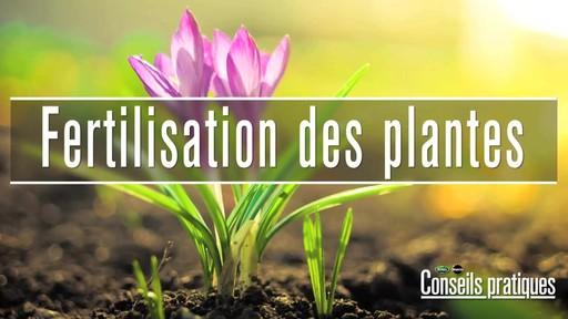 Fertilsation des plantes - image 1 from the video