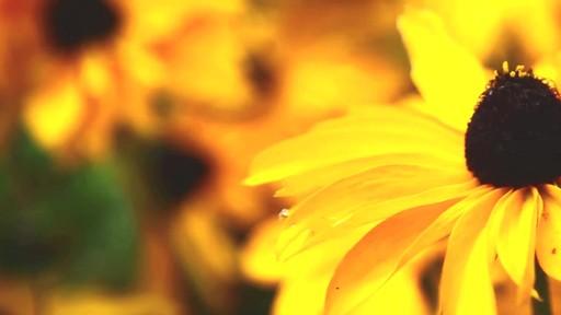 Fertilsation des plantes - image 2 from the video