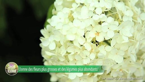 Fertilsation des plantes - image 3 from the video
