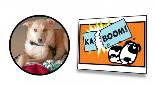 Thundershirt Gray Dog Anxiety Treatment Shirt - image 1 from the video