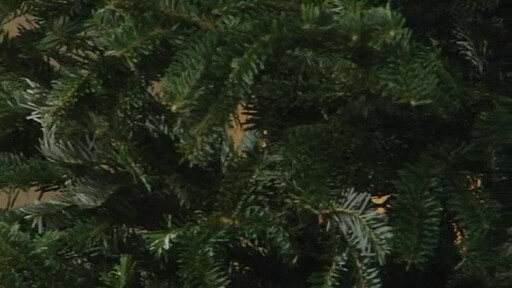 Christmas Tree - image 1 from the video