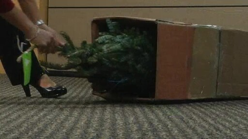 Christmas Tree - image 3 from the video