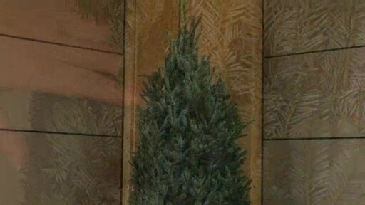 Christmas Tree - image 5 from the video