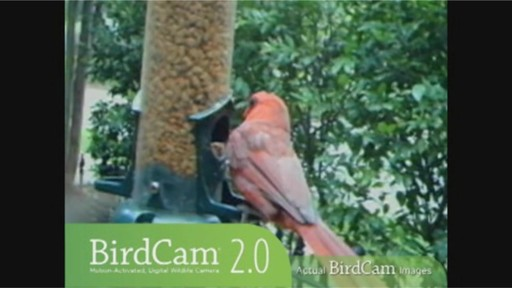 Wingscapes Birdcam 2.0 » Welcome to Costco Wholesale