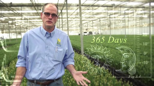Sunvalley Farms Soil Tulips - image 1 from the video