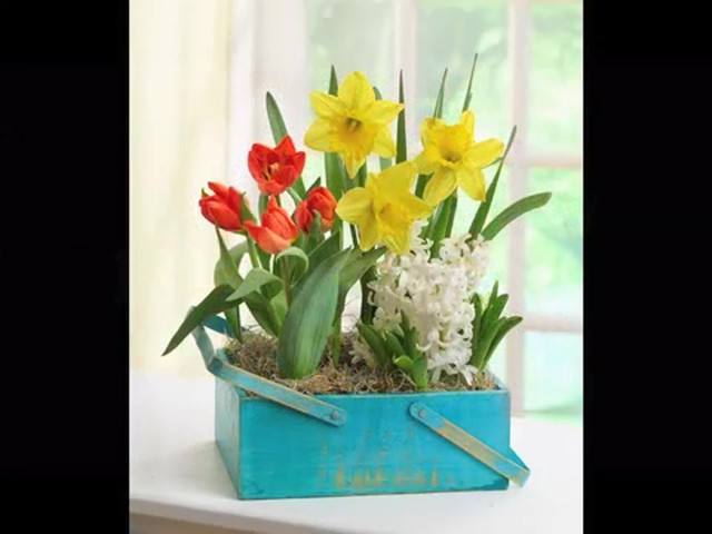 Spring Country Bulb Garden Care & Handling Tips Video - image 10 from the video