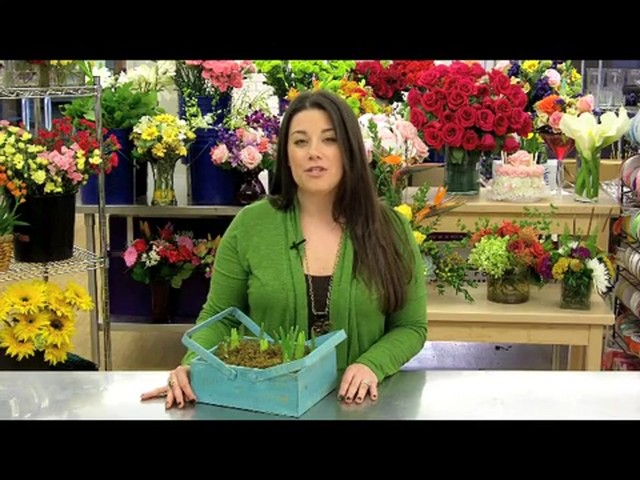 Spring Country Bulb Garden Care & Handling Tips Video - image 5 from the video