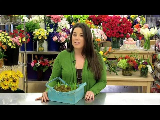 Spring Country Bulb Garden Care & Handling Tips Video - image 9 from the video