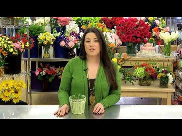 Heavenly Hyacinth Garden Care & Handling Tips - image 2 from the video