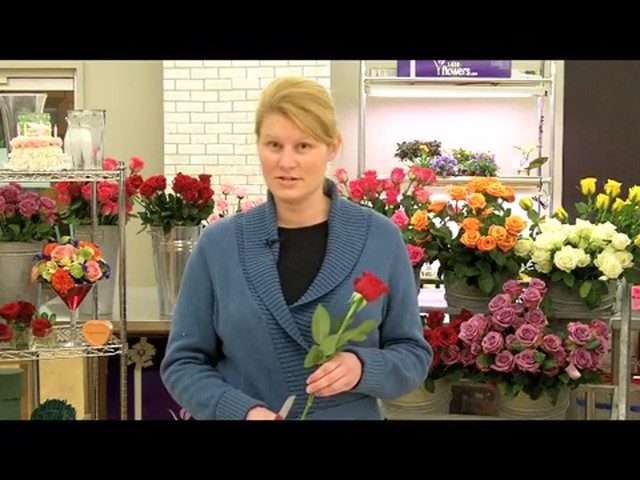 Top 10 Valentines Day Rose Care Tips Countdown  - image 7 from the video